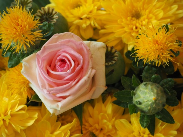 "Leinwandbild ""Rose Rosa"""