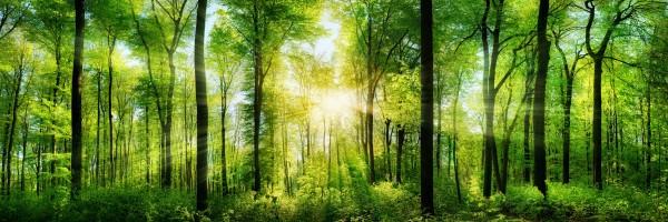 "Fototapete ""Sonnenstrahlen im Wald"""