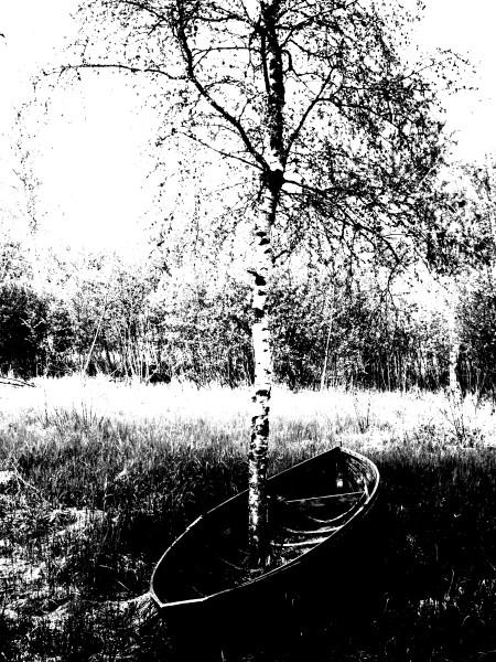 "Leinwandbild ""Baum im Boot"""