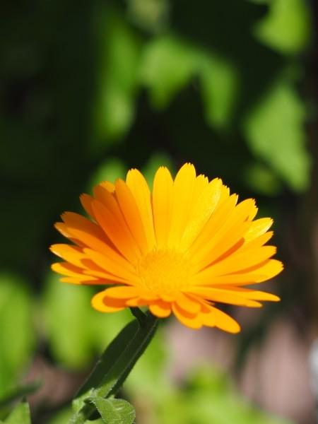 """Leinwandbild """"Blume in orange"""""""
