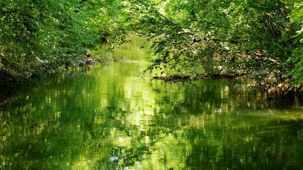 """Leinwandbild """"Fluss grün schimmernd"""""""