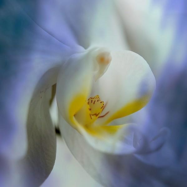 """Leinwandbild """"Orchidee"""""""