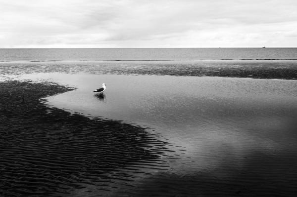 """Leinwandbild """"Möve im Wasser"""" sw"""