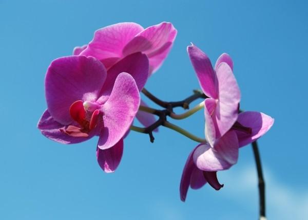 """Leinwandbild """"Orchidee violett"""""""