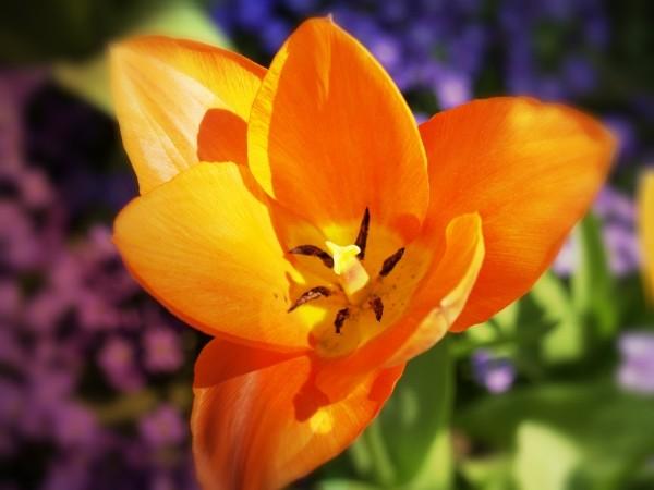 """Leinwandbild """"Blüte in orange"""""""