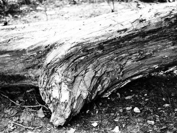 "Leinwandbild ""Stück Holz"" sw"