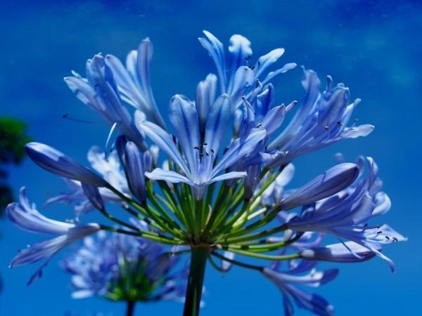"""Leinwandbild """"Blume in blau"""""""