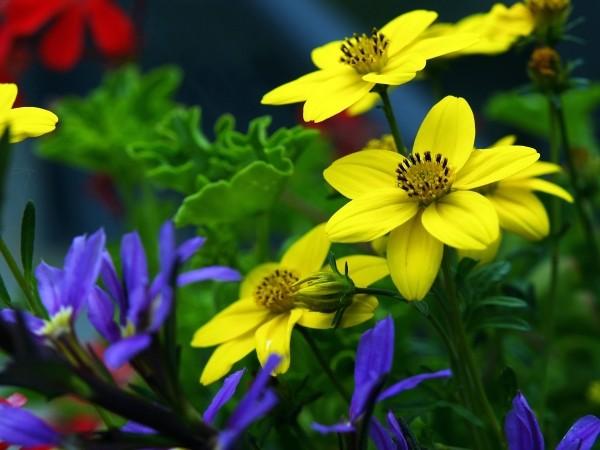"Leinwandbild ""Blumenpracht"""
