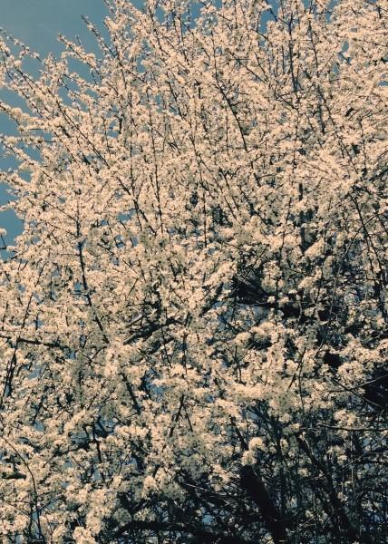 "Leinwandbild ""Blütenstrauch"""