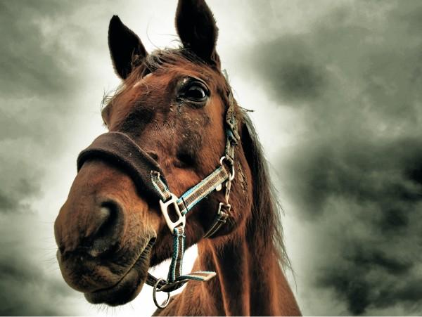 """Leinwandbild """"Pferdekopf"""""""