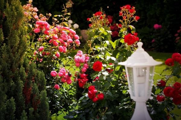 "Leinwandbild ""Rosen im Garten"""