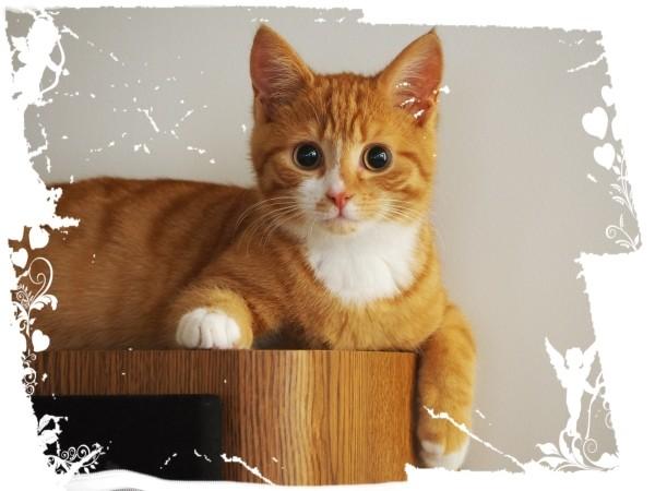 """Leinwandbild """"Sweet Cat"""""""